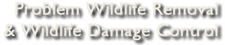 Problem Wildlife Removal & Wildlife Damage Control